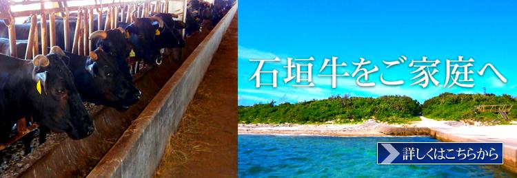 石垣島より